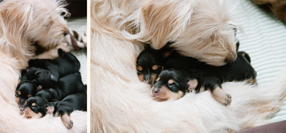 Puppies4